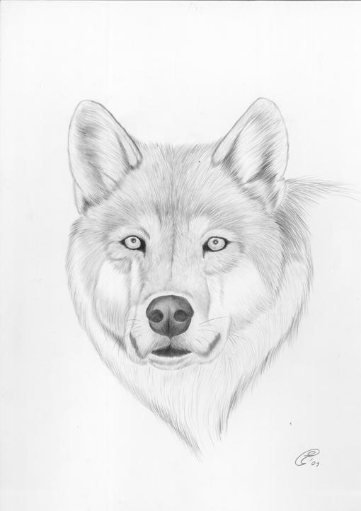 In Bocca Al Lupo Italian Wild Wolf