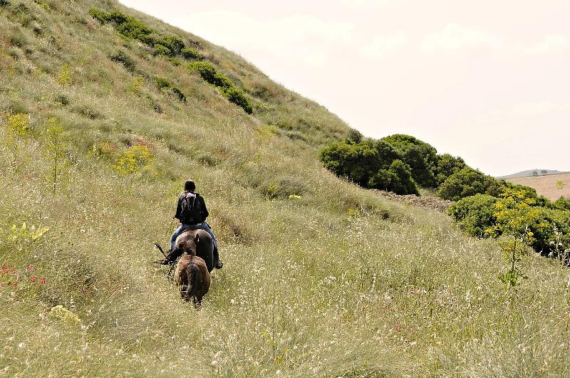 A cavallo tra i lupi italian wild wolf for Ardeatina arredamenti di lupi gabriella