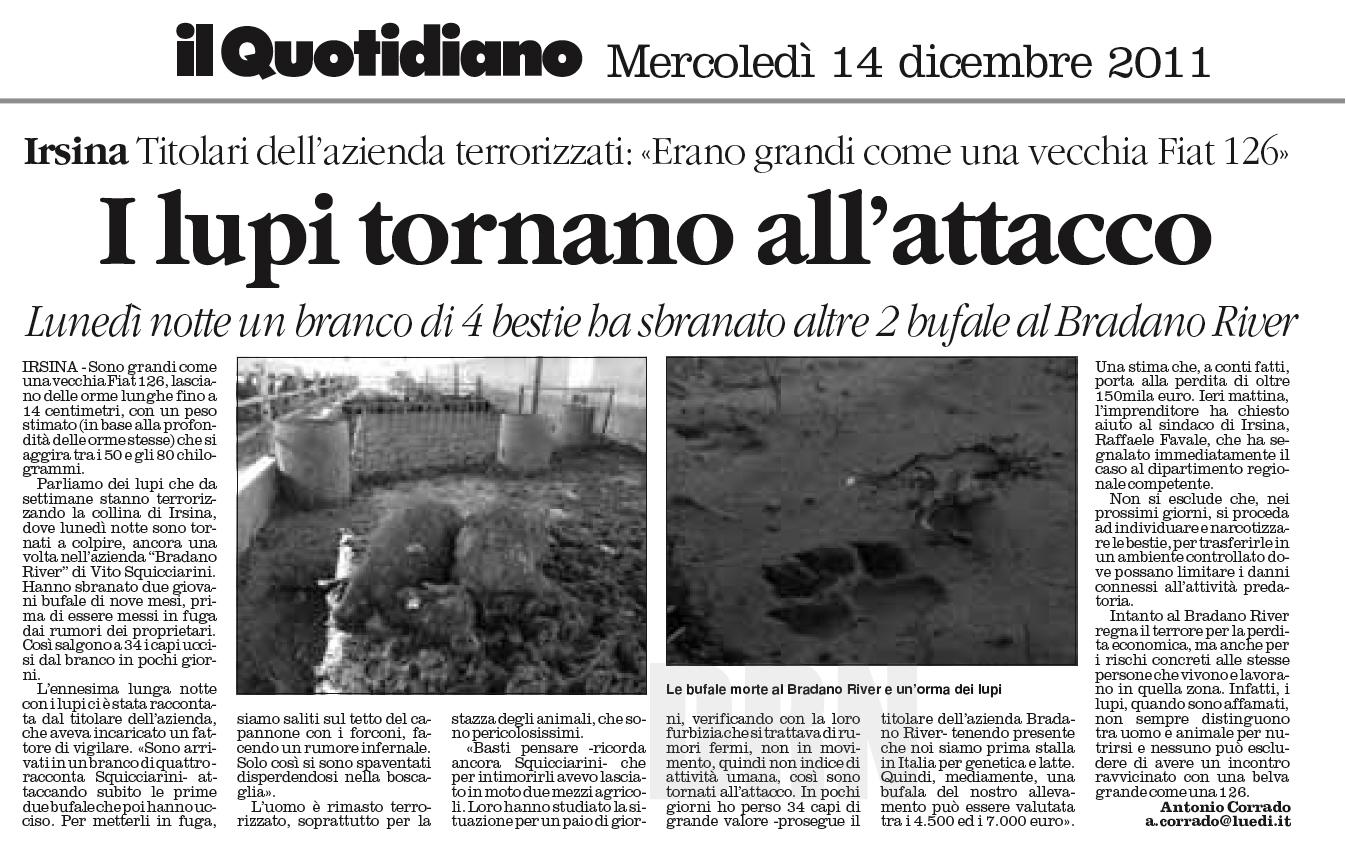 I lupi neri dell appennino tosco emiliano italian wild wolf for Ardeatina arredamenti di lupi gabriella