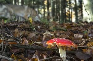 Particolare nel bosco