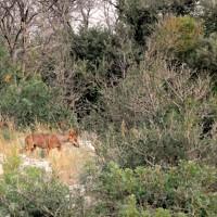 Report 2013-14 il Lupo nel Materano