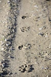 Pista di orme sul terreno