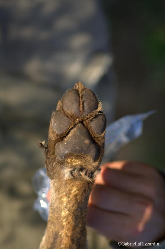 Un pannello sul lupo nel parco della murgia materana for Ardeatina arredamenti di lupi gabriella