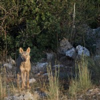 Una rivista dedicata al lupo