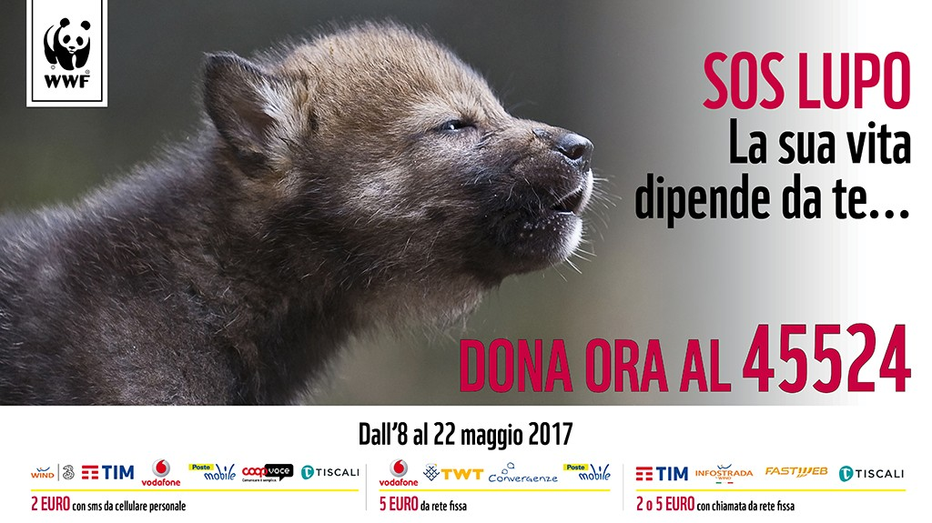 SOS Salviamo il lupo dai crimini di natura