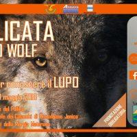 Un campo per conoscere il lupo
