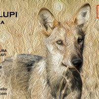 Mostra fotografica Nel mondo dei lupi – inaugurazione 2 novembre 2018
