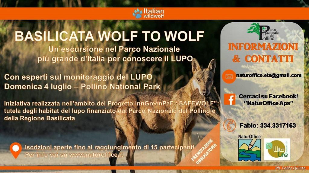 Basilicata Wolf to Wolf: escursione per conoscere il lupo
